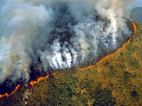 La selva amazónica te necesita, revisa qué puedes hacer