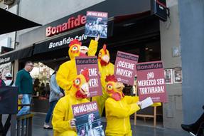 Siguen las protestas contra las jaulas en Bonafide