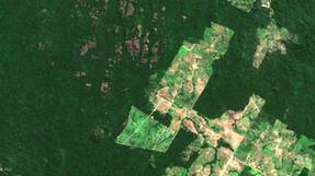 En el Día Mundial de la Selva Tropical, ONG advierte sobre la importancia de este ecosistema para pr