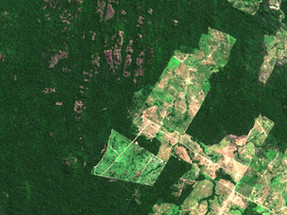 NGO highlights the importance of rainforests to prevent pandemics