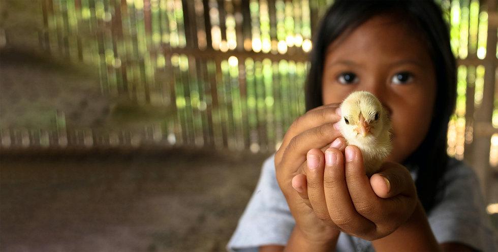 donation-girl-chick.jpg