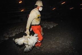 Un nuevo informe de la ONU relaciona la creciente demanda de productos animales con futuras pandemia
