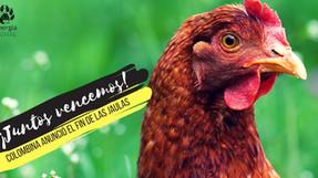 Victoria: Después de siete meses de campaña, Colombina se compromete a no usar huevos de gallinas en