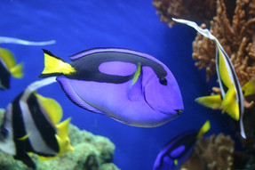7 discoveries that prove that fish are intelligent and sensible beings