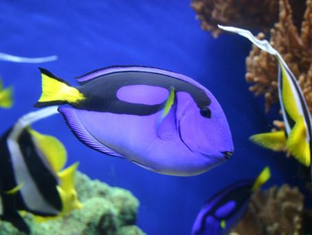 7 descobertas que provam que peixes são inteligentes e sensíveis
