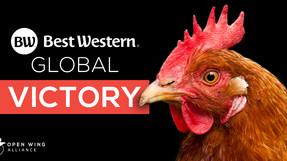¡Victoria Global! Best Western anuncia política libre de jaulas