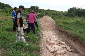 Thailand Mencatat Munculnya Dua Wabah Zoonosis