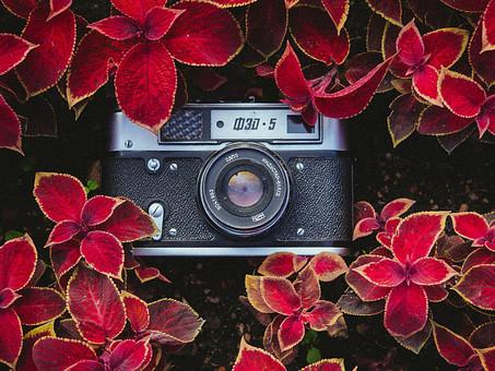 Mindfulness Photography: El Arte de la Fotografía Consciente o Fotografía Zen /