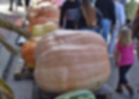 op giant pumpkins.jpg