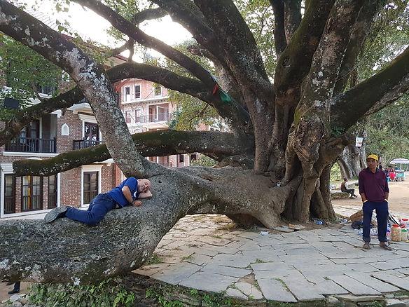 נפאל אביאל על עץ.jpg