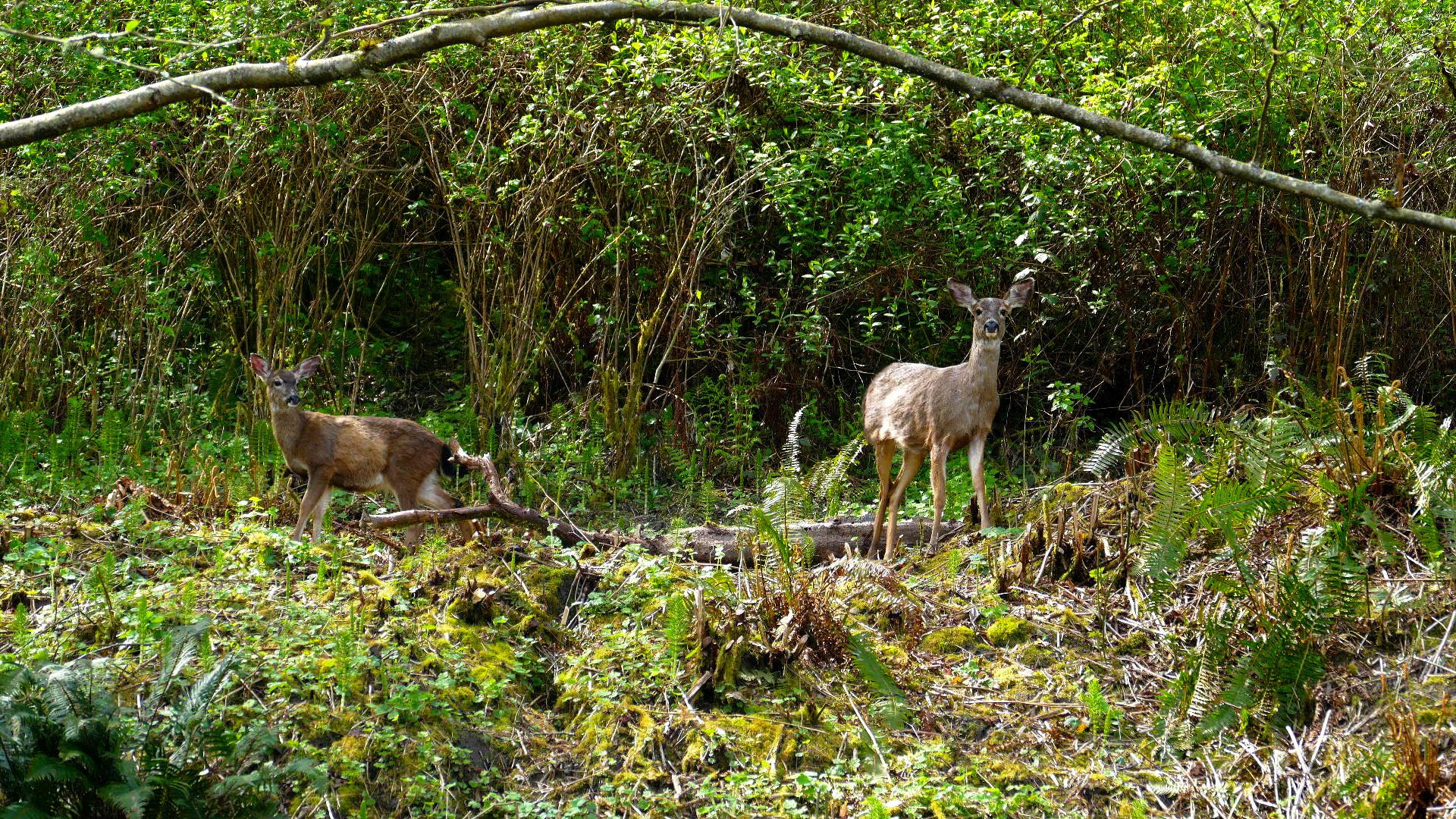 20-backyard wild life