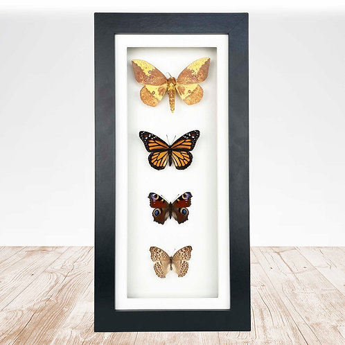 Long Multi Moth and Butterfly Frame
