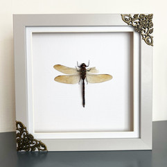 Dragonfly Frame.JPG