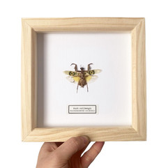 Natural Wood Mantis.JPG