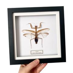 Mantis Black Frame.JPG