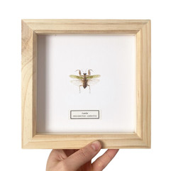 Mantis Natural Wood Frame.JPG
