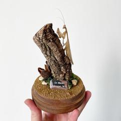 Dr Mantis.JPG