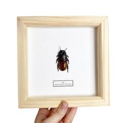 Cockroach Frame.JPG