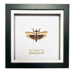 Leaf Mantis Frame.JPG