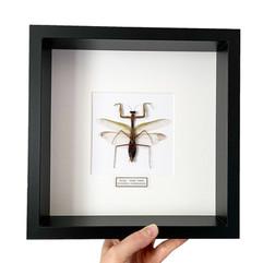 Big Mantis Frame.JPG
