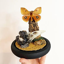 Butterfly and Skull Display