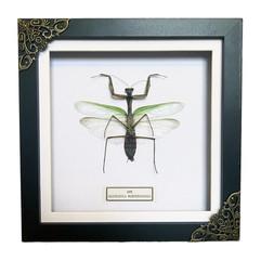 Dot Mantis Frame.JPG