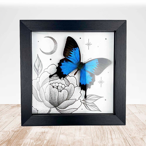 ORIGINAL Artwork with REAL Mountain Swallowtail (Papilio ulysses)