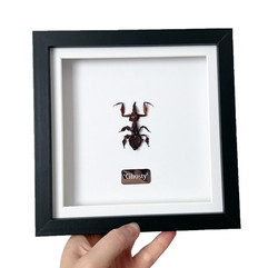 Ghosty Mantis Frame.JPG