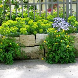 Jura Mauersteine bepflanzt.JPG