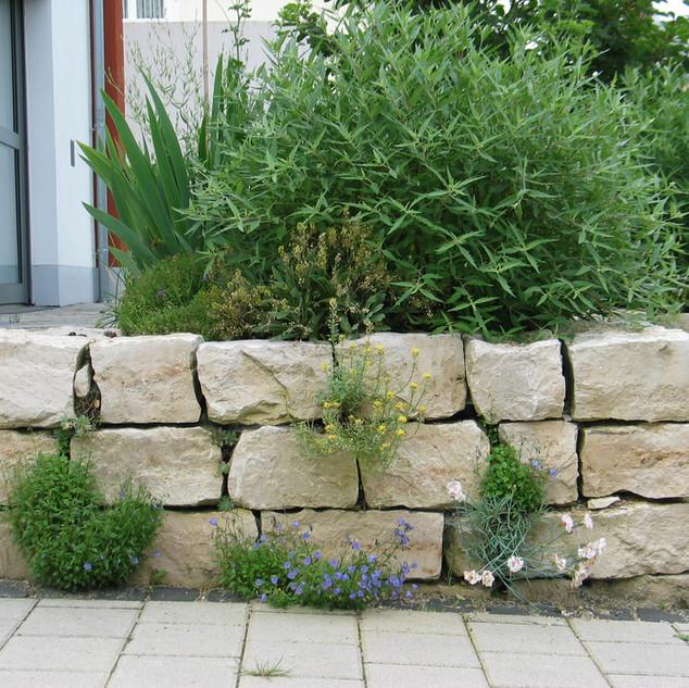 Mauersteine Jura bepflanzt.JPG