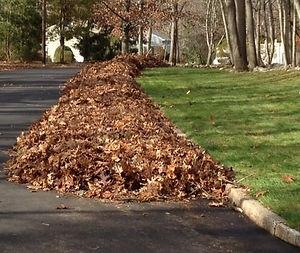 Curbside-leaves-cropped.jpg