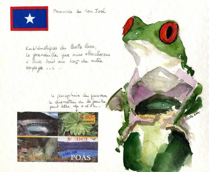 w02Poas_grenouille