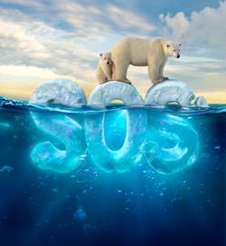 Polar Bear SOS
