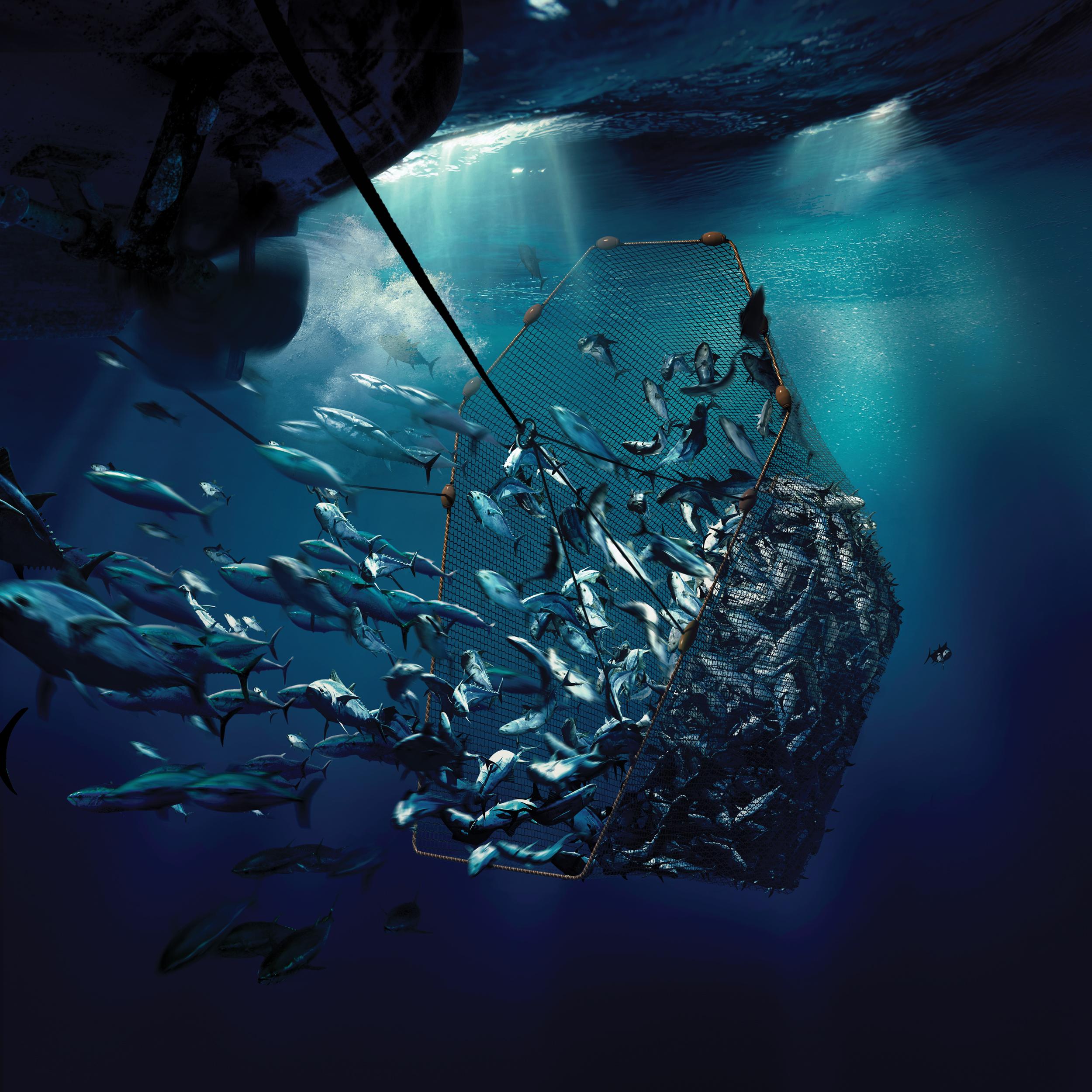 Tuna Trap