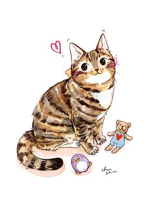 2021-spoty-kitty-chocye.jpg