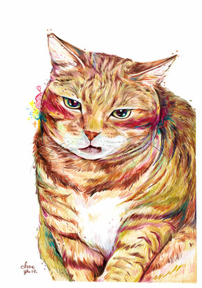 2019-catlady-chocye.jpg