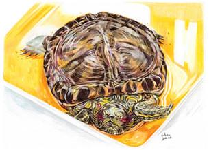 2020-turtle-chocye.jpg