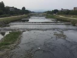 《軽四輪車の緊急配送》すろ〜らいふ♪京都鴨川と戯れる白鷺