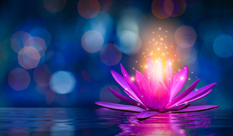 lotus Pink light purple floating light s