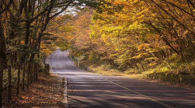 autumn-4608184_1920.jpg