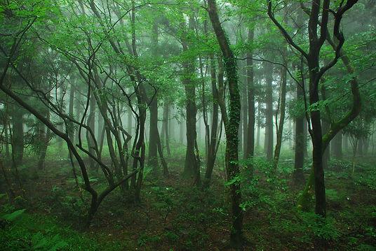 wood-867908_1920.jpg
