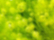 微藻—唯一天然微藻萃取,100%純DHA/AA 最接近母乳成分人體好吸收無負擔,超過500張專利研究,臨床證實有效促進活力敏捷,維持青春健康。思緒清晰效率100分。頂級大腦營養攝取來源。