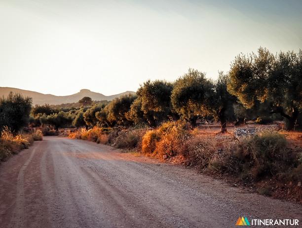 Itinerantur_Canet_lo_Roig_Oliveres_Mil·