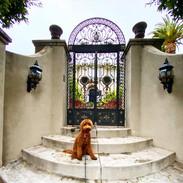 Goldendoodle Puppies | Kinzie Doodles