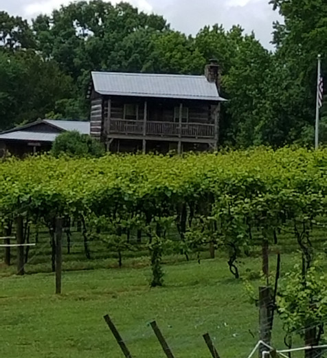 Log Cabin in the vines.jpg