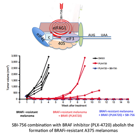 Diagram and chart showing abolishment of BRAFi-resistant A375 melanoma formation