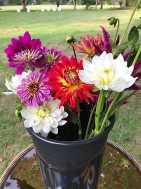 Harvesting Blooms