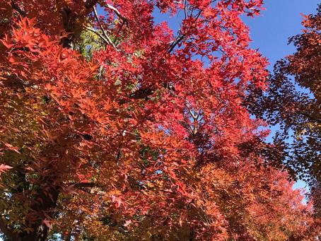 秋の車窓から