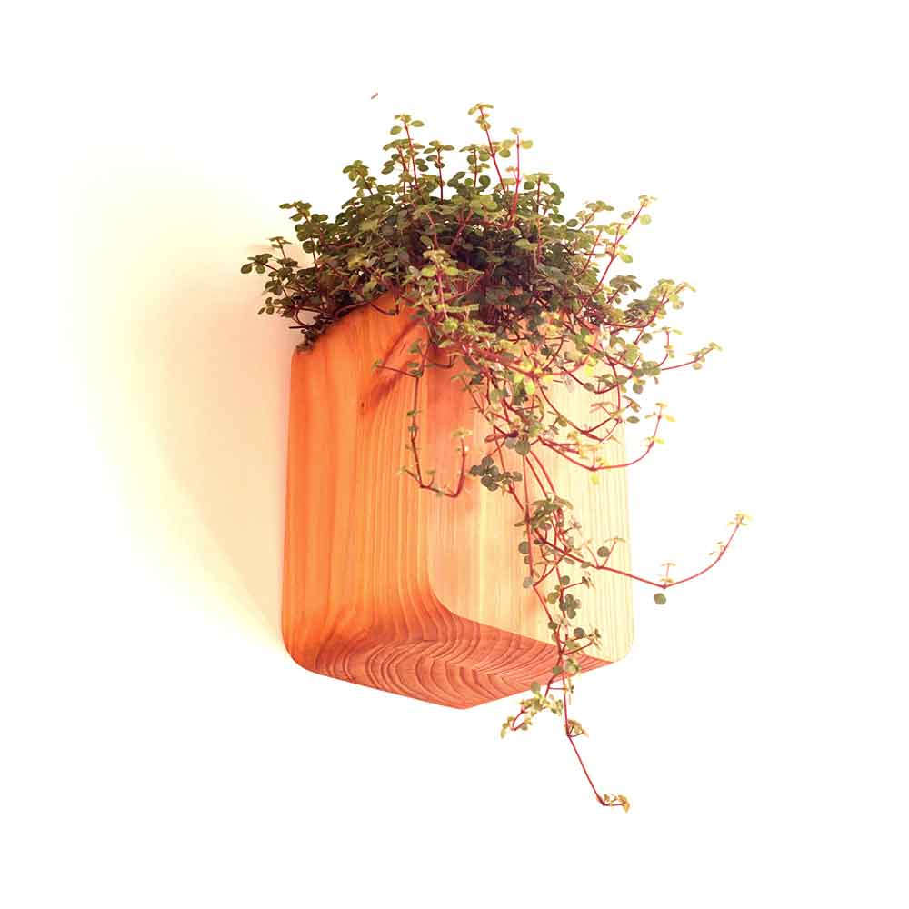 small wall mounted planter