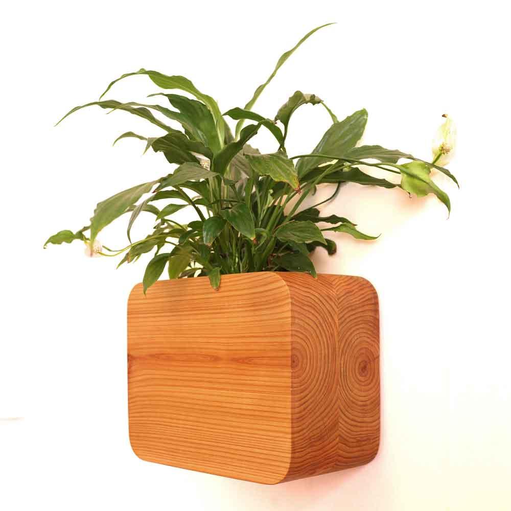 medium wall mounted planter
